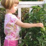 家庭菜園(かていさいえん)