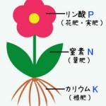 肥料の三要素(ひりょうのさんようそ)
