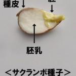 種子(しゅし)