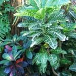 観葉植物(かんようしょくぶつ)