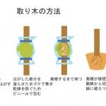 取り木(とりき)