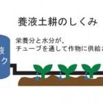 養液土耕(ようえきどこう)