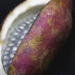 袋果(たいか)