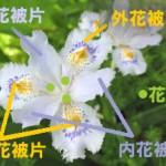花被(かひ)