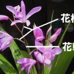 花軸(かじく)