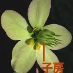 子房(しぼう)