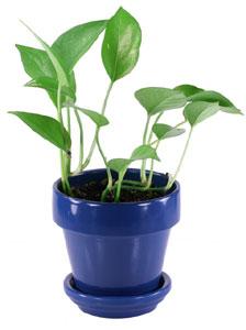 植木鉢のサイズは号であらわす