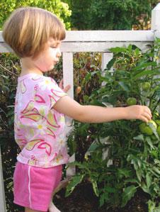 家庭菜園は、キッチンガーデンとも呼ばれる