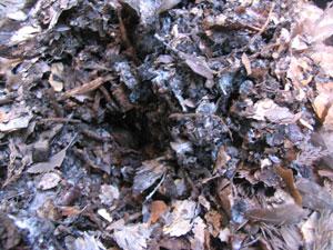 堆肥の材料を、底から混ぜ合わせ、空気を含ませること