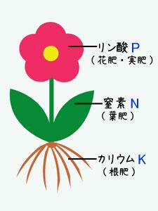 肥料の三要素