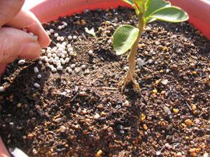 追肥の化成肥料は、直接植物に触れないように与える