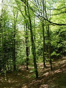 木漏れ日が差す、森林のような環境のことを、半日陰という