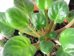 一株の植物