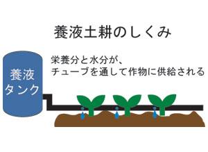 養液土耕のしくみ(簡易)