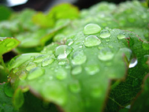植物の葉面に、液状の薬剤や肥料をかける葉面散布
