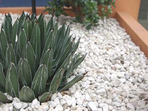 サボテンの鉢に敷き詰められた化粧砂