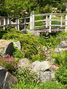 岩の隙間に咲く小花が美しいロックガーデン