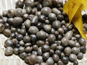 山芋の肉芽は、むかごと呼ばれる