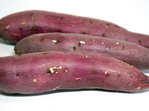 サツマイモは塊根部分を食用とする