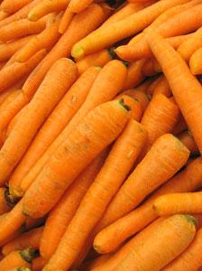 根菜は、主根に養分が蓄えられたもの