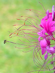 花の外側に長く伸びた花糸